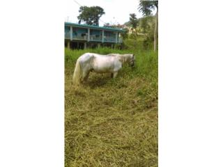 Caballo cv o ck por animales Puerto Rico