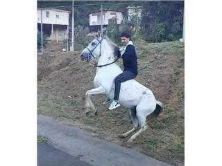 Vendo caballo gris  Puerto Rico