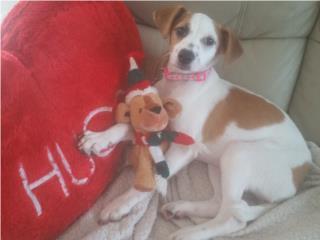 Hermosa perrita 3 meses para adopcion Puerto Rico