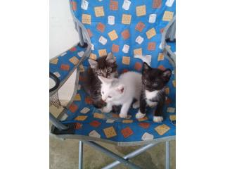 Se regalan 3 hermosos gatitos Puerto Rico