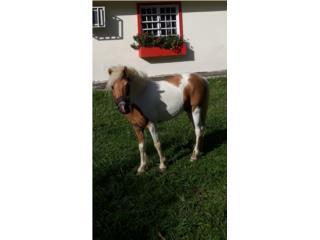 Precioso Pony en venta Puerto Rico