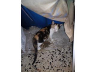 Se regalan dos gatitas de 3 meses  Puerto Rico