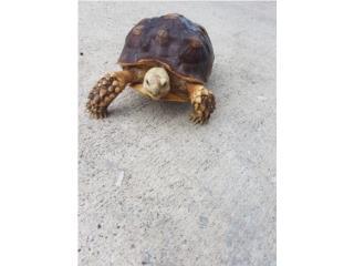 Tortuga  Puerto Rico