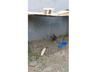 Jaulas para gallos Puerto Rico