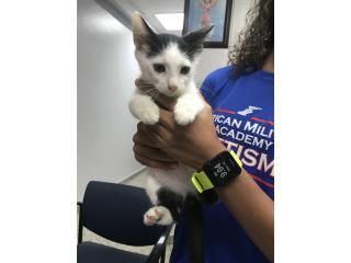 Gatito rescatado Puerto Rico