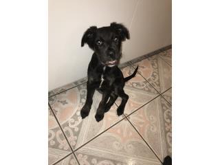 Cariñoso puppy  Puerto Rico