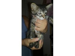Regala gatito Puerto Rico