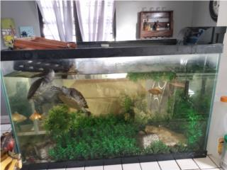 Pecera con dos tortugas Puerto Rico
