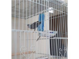 Puerto Rico  Parrotlets, Perros Gatos y Caballos