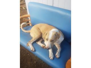 Buscando perro perdido  Puerto Rico