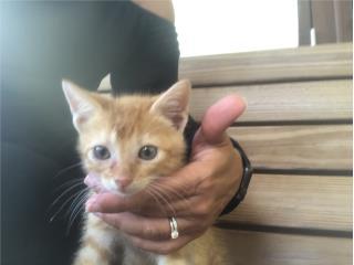 Hermosos gatitos 1 mes y medio! Puerto Rico