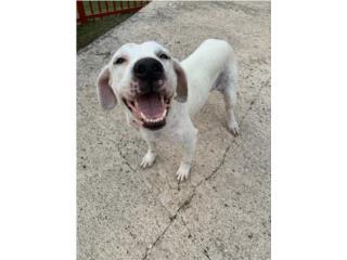 Hermosa perra mix para adopción  Puerto Rico