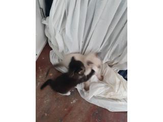Se regalan cinco gatitos  para adopción  Puerto Rico