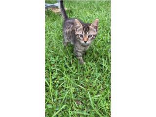 Tengo 5 hermosos gatitos para regalar Puerto Rico