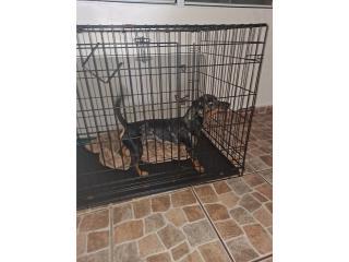 Se busca hogar para hermoso perrito. Es bien  Puerto Rico