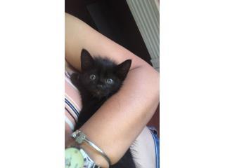 Busco un hogar para esta gatita Puerto Rico
