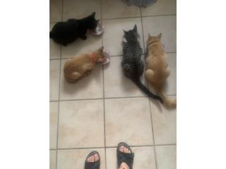 Se regalan gatitos Puerto Rico