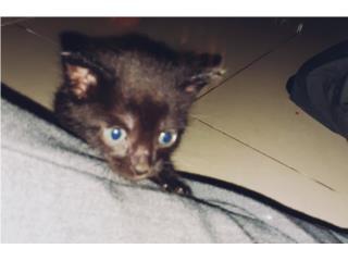 Se regala gatitos bebés Puerto Rico