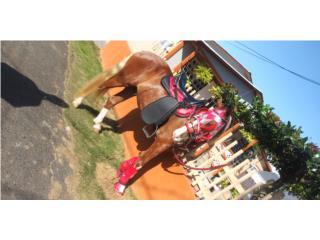 Se vende o se cambia caballo Puerto Rico