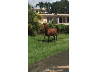 Yegua Puerto Rico