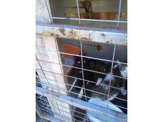 Gato en adopcion Puerto Rico
