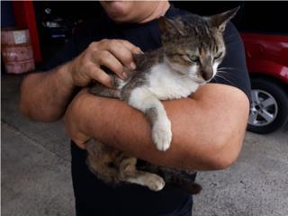 Se regala gatita Puerto Rico