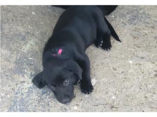 BUSCAN HOGAR puppies mix Puerto Rico