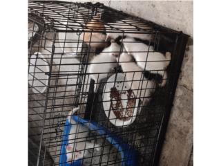 Puerto Rico Ya se regalaron, Perros Gatos y Caballos
