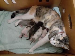 Gatitos Recién nacidos, Mascotas Puerto Rico