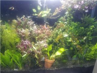 Se Vende Plantas Acuaticas Puerto Rico