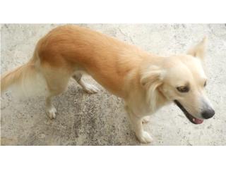 Se regala perra cariñosa Puerto Rico