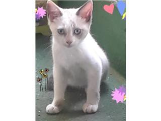Hermoso gatito al que va amar Puerto Rico
