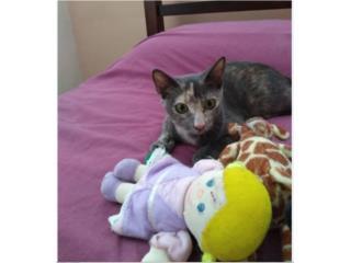 Bella y cariñosa gatita busca hogar Puerto Rico