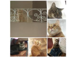 Se busca hogar para gatos Puerto Rico