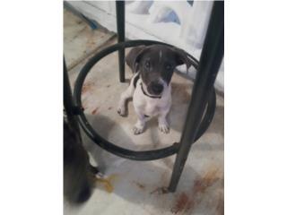 Perrito puppy para adopción Puerto Rico