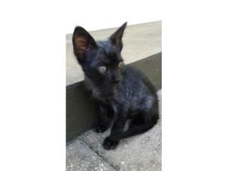 Precioso Gatito Negro llamado