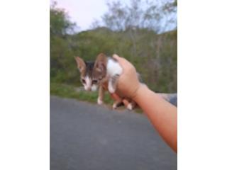 gatito bebe macho Puerto Rico