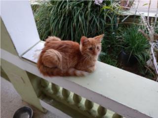 Se regala gato Puerto Rico