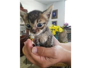 Hermosos gatitos rescatados buscan un hogar Puerto Rico