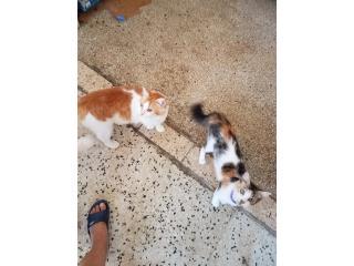 Se regala gatos Puerto Rico