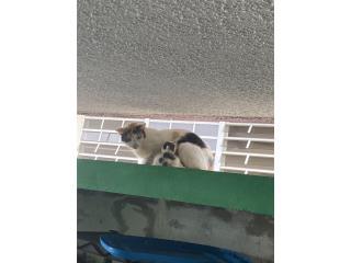 Se regalan gatitos bebés  Puerto Rico