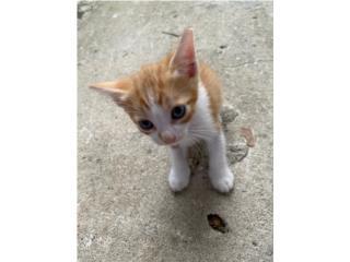 Regalo doy en adopción gatitos de 2 meses Puerto Rico