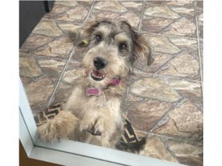 Puppy 5 meses Adopción  Puerto Rico