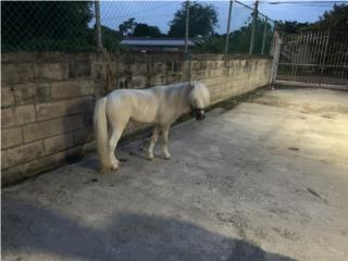 Pony Puerto Rico