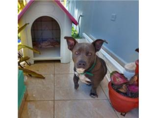 Hermoso perro rescatado para adopción Puerto Rico