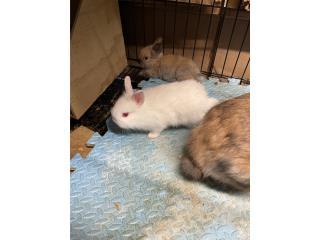 conejos bebes para adopción Puerto Rico