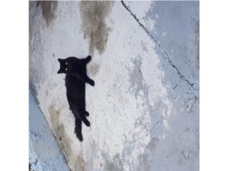 Adopta un gatito Puerto Rico