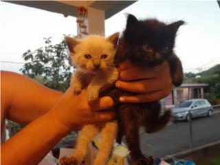 Se regala 4 gatitos  Puerto Rico