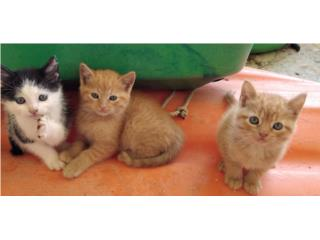Se regalan 3 gatitos! Puerto Rico