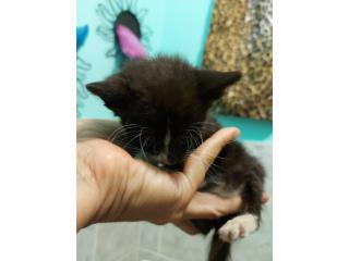 Regalo gatito huerfano Puerto Rico
